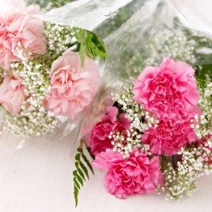 pink-carnation