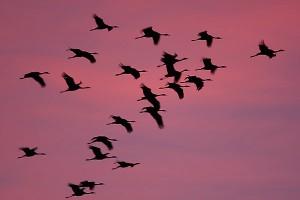 birds_in_flight